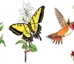 Pollinator-slider1